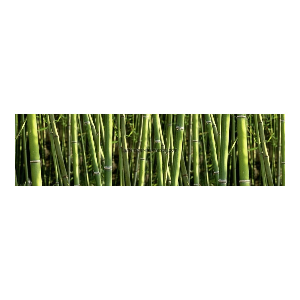 Brise vue toile occultante bambous 3 m - Brise vue imprime ...