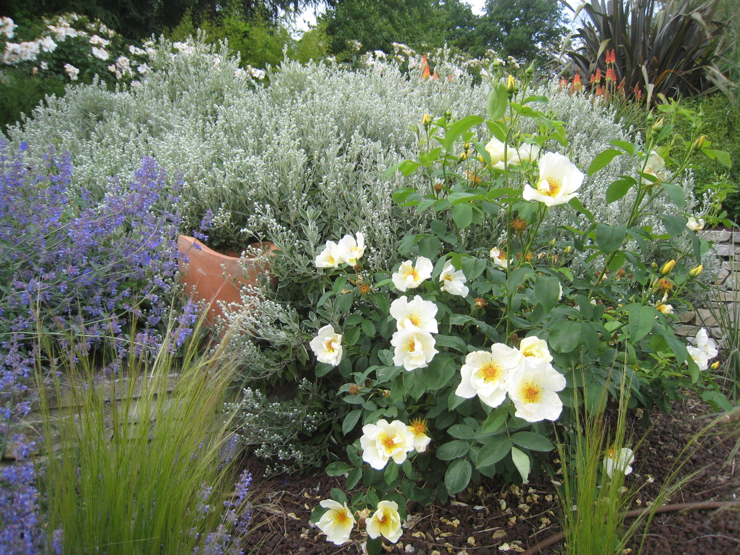 autres plantes jardin méditerranéen