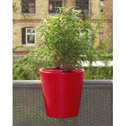 Jardinière en polyéthylène ronde Steckling 30 x 30 x 30 cm rouge