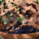 Brasero de jardin en acier corten 56 x 58,8 x 64,3 cm motifs oiseaux