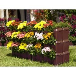 Mur Végétal Mini-Garden Marron