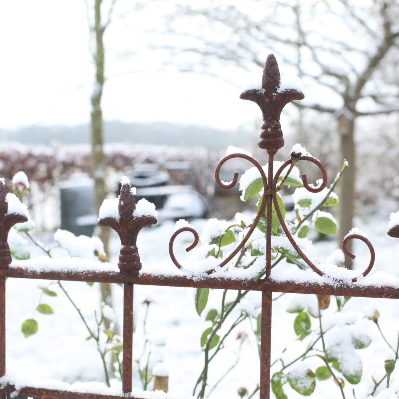 Comment Récupérer Une Plancha Rouillée treillage de jardin en acier rouillé lys l 54 x 1,9 x 164,5 cm