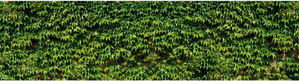 brise vue en toile balcon cl ture et terrasse vigne vierge 0 80 x 3 ml. Black Bedroom Furniture Sets. Home Design Ideas