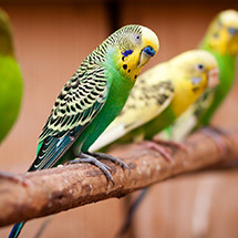 Volières et Pigeonniers