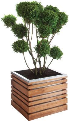 jardinière en pin